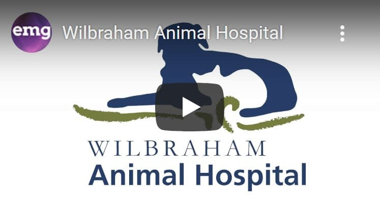 Video Production Wilbraham MA Video Services